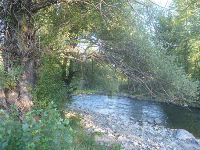 Zelten am Fluß